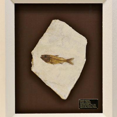 Encadrement d'un fossile